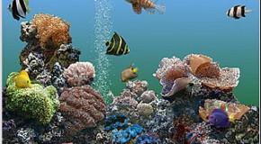Salva pantallas de acuario